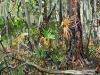 """""""Fallen Tree (St. Marks)"""""""