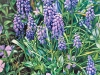 Grape Hyacinths and Periwinkle