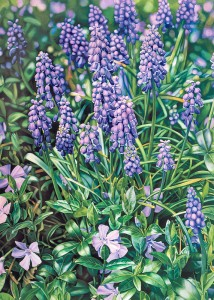 """Grape Hyacinths and Periwinkle"" Watercolor on paper, 54"" x 42"""